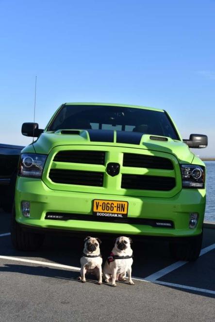 17 juni: Van deze Dodge zijn er maar 7000 gemaakt waarvan er 4 in Nederland rondrijden! Deze specifieke wagen is nummer 158. Het is een Dodge RAM 1500 Sublime Green. Verdere info: 5.7 hemi V8 met 400 pk 8 traps automaat